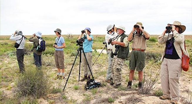 Bellbird tours in the field