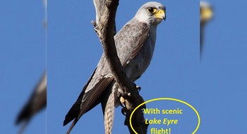 Lake Eyre and Outback Raptors Tour