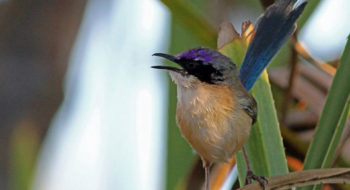 Savannah to Tropics Birding Tour