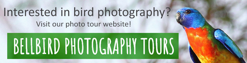 bellbird photo tour banner