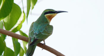 Dubai Area Short Birding Tour