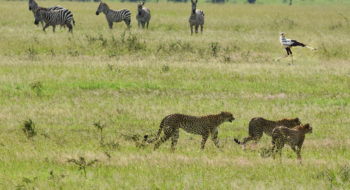Tanzania Birds & Wildlife Tour